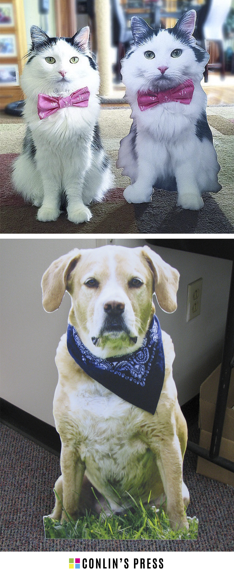 Cat & Dog Cutouts